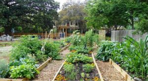 Incorporating A Green Community Concept